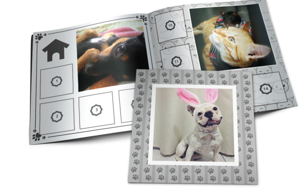 Medium mockup instabum pet clean loja